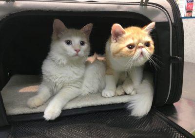 consulta-gatos-caja