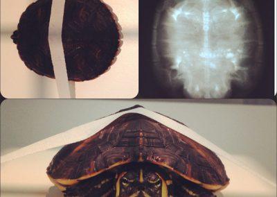exotico-radio-tortuga